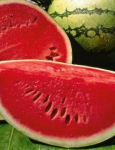 Bogata, šarena i zdrava letnja hrana