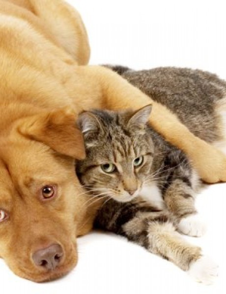 Zanimljivosti o kučkarima i mačkarima