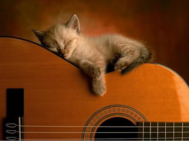 Jugonostalgija Gitara i krivo je more1 Jugonostalgija: Gitara i krivo je more