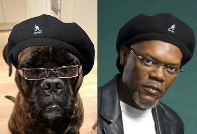 Samuel Jackson and this dog1 Najbizarnije sličnosti koje ste videli do sad