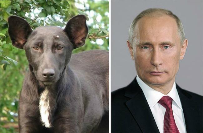 This dog and Vladimir Putin1 Najbizarnije sličnosti koje ste videli do sad