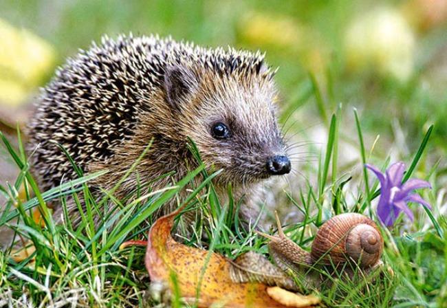 jez1 Zanimljivosti iz životinjskog sveta