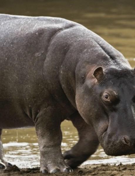 Zanimljivosti iz životinjskog sveta