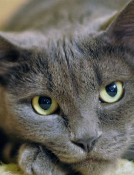 Zašto mačka nije vaš prijatelj?