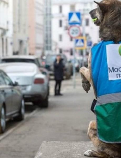 Psi zaposleni u Parking servisu Moskve