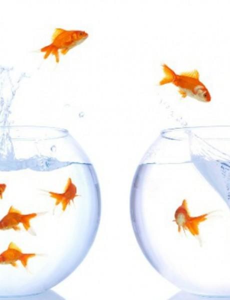 Vic dana: Zlatne ribice
