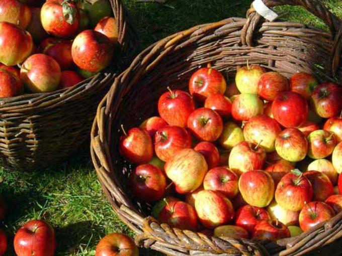 jabuke Vic dana: Plavuše u akciji