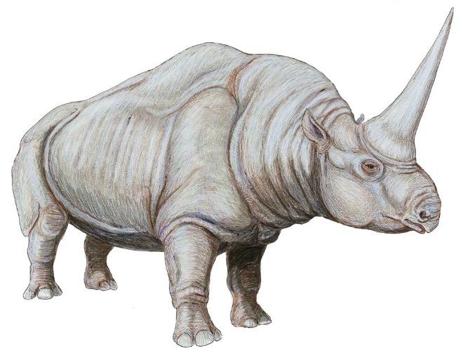 siberian unicorn cr wikimedia Dmitry Bogdanov Gde da otputuješ ako želiš da vidiš STVARNOG jednoroga?