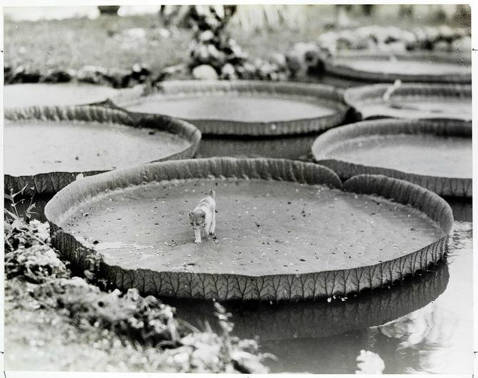 Neobjavljene fotografije iz arhive Nacionalne geografije Neobjavljene fotografije iz arhive Nacionalne Geografije (GALERIJA)