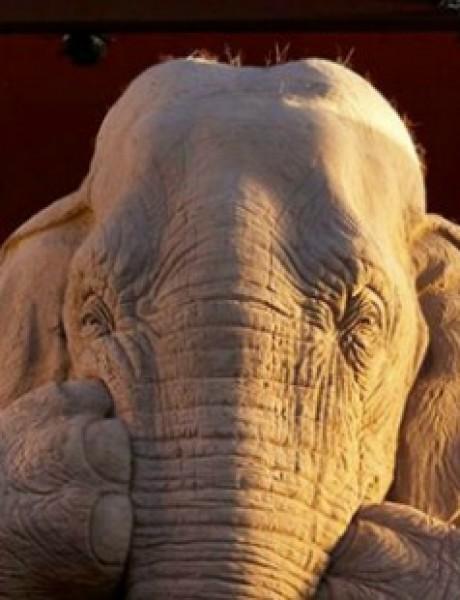 Pogled na OVOG slona će vas oduševiti