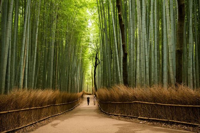 Razlozi zbog kojih ćete sigurno posetiti Japan Razlozi zbog kojih ćete sigurno posetiti Japan (GALERIJA)