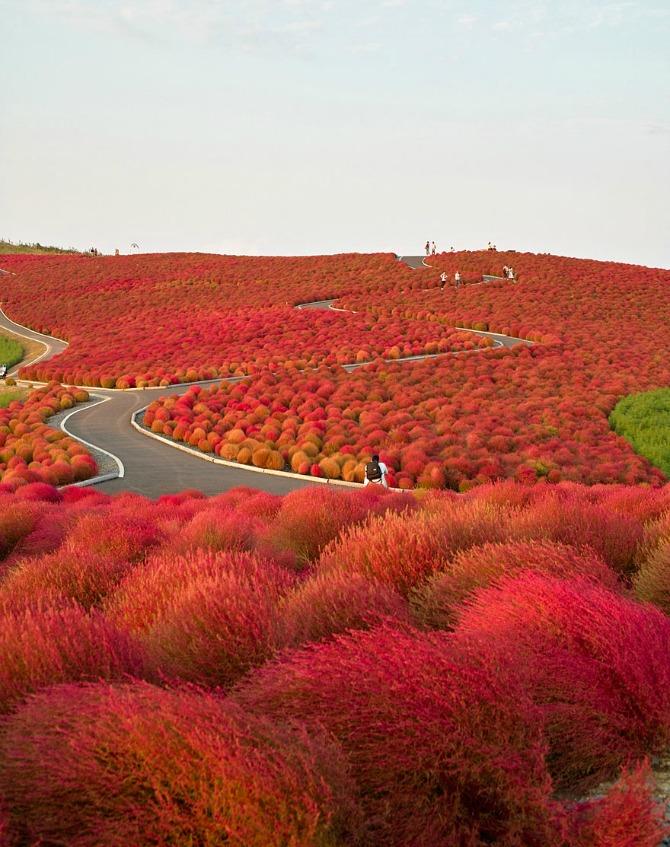 Razlozi zbog kojih ćete sigurno posetiti Japan3 Razlozi zbog kojih ćete sigurno posetiti Japan (GALERIJA)