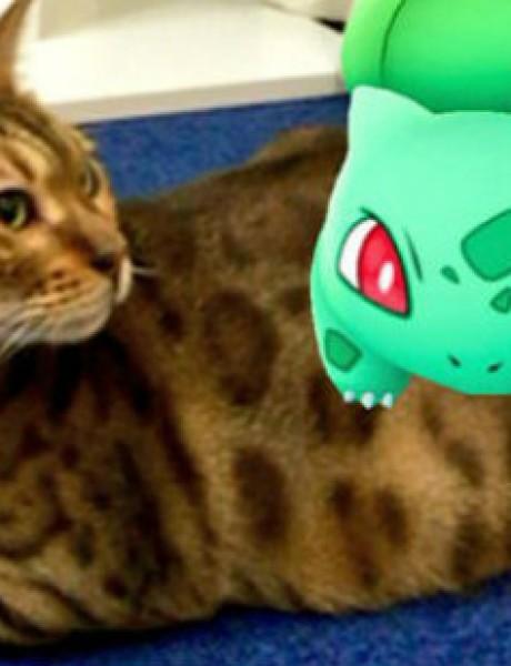 Da li kućni ljubimci STVARNO mogu da vide Pokemone?!