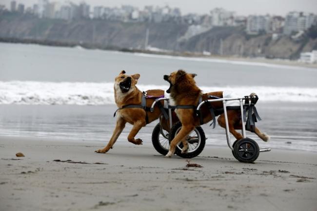 Znate li zašto je vaš pas srećniji od vas2 Znate li zašto je vaš pas srećniji od vas?