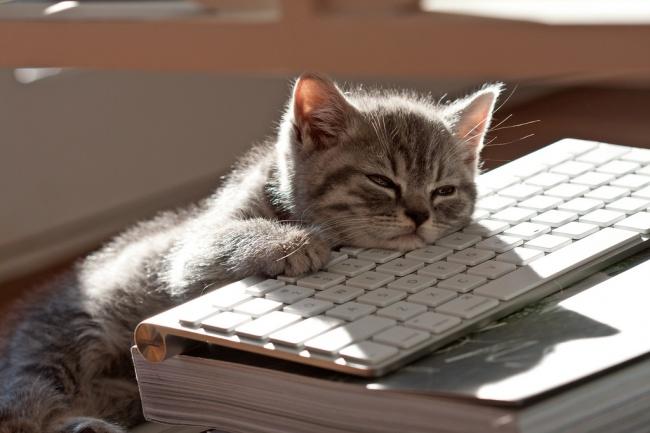 Mačke koje će vas podsetiti na sebe dok ste na poslu11 Mačke koje će vas podsetiti na sebe dok ste na poslu
