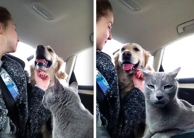 Mačke koje će vas podsetiti na sebe dok ste na poslu2 Mačke koje će vas podsetiti na sebe dok ste na poslu