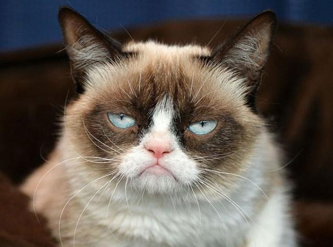 Mačke koje će vas podsetiti na sebe dok ste na poslu4 Mačke koje će vas podsetiti na sebe dok ste na poslu