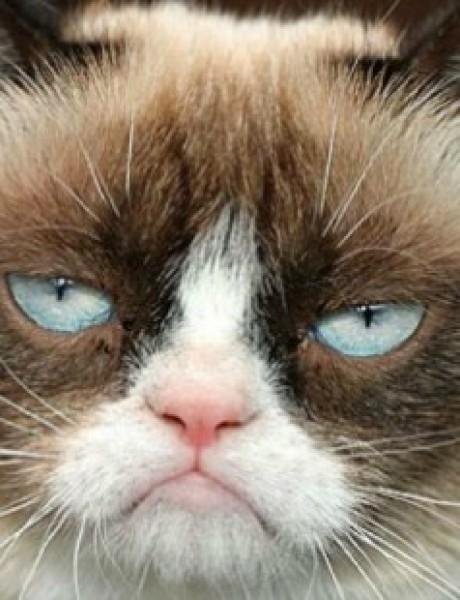 Mačke koje će vas podsetiti na sebe dok ste na poslu