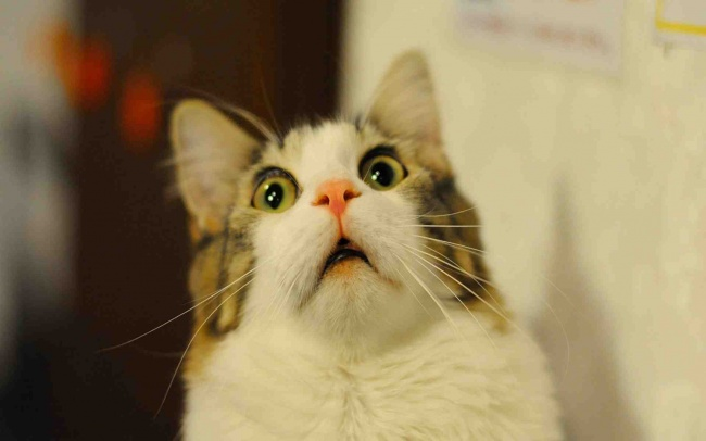 Mačke koje će vas podsetiti na sebe dok ste na poslu6 Mačke koje će vas podsetiti na sebe dok ste na poslu