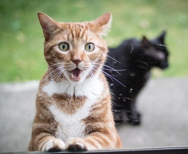 Mačke koje će vas podsetiti na sebe dok ste na poslu9 Mačke koje će vas podsetiti na sebe dok ste na poslu
