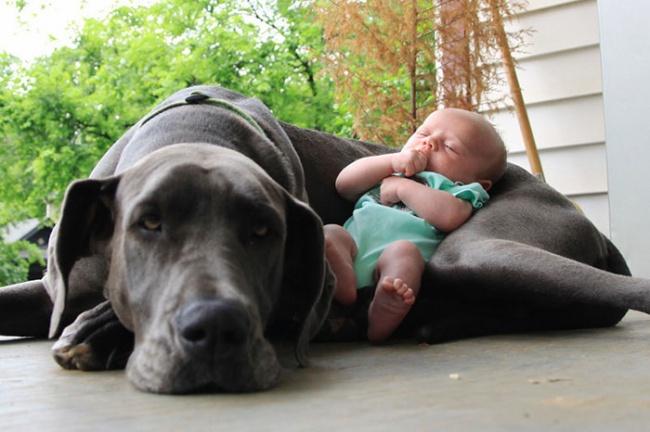 Nakon ovih fotografija sigurno ćete poželeti da imate svog psa2 Nakon ovih fotografija sigurno ćete poželeti da imate svog psa (GALERIJA)