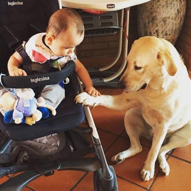 Nakon ovih fotografija sigurno ćete poželeti da imate svog psa3 Nakon ovih fotografija sigurno ćete poželeti da imate svog psa (GALERIJA)