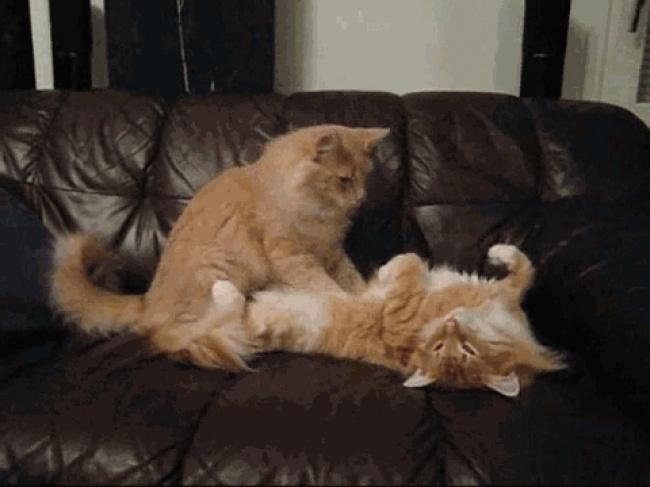 Naučnici su objasnili kako mačke produžavaju vaš život2 Naučnici su objasnili kako mačke produžavaju vaš život