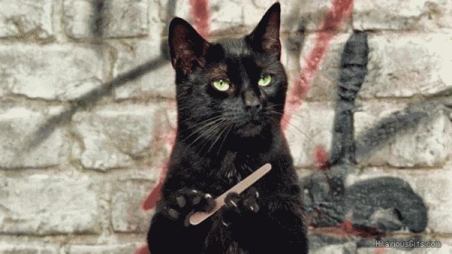 Naučnici su objasnili kako mačke produžavaju vaš život3 Naučnici su objasnili kako mačke produžavaju vaš život