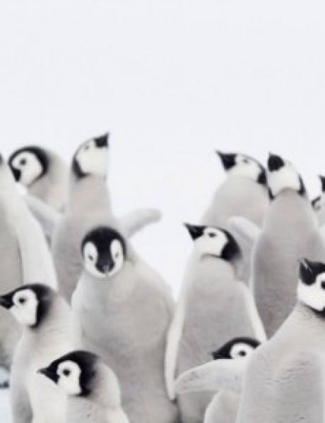 Fotografije zbog kojih ćeš poželeti da posetiš Antarktik (GALERIJA)