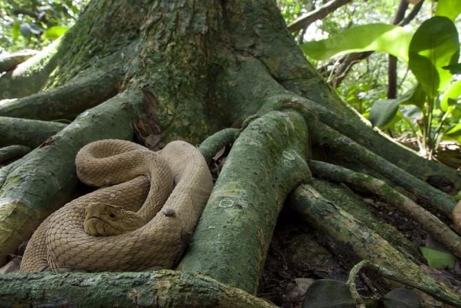 ostrvo zmija Najopasnije turističke destinacije na svetu
