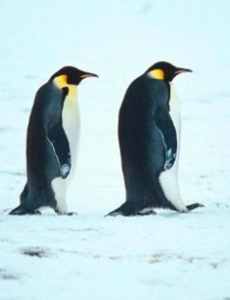 Razlozi zbog kojih sigurno ne bi voleo da budeš pingvin