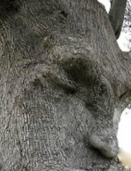 Kad se priroda poigra sa našim čulima: Kad drvo zapravo ne liči na drvo