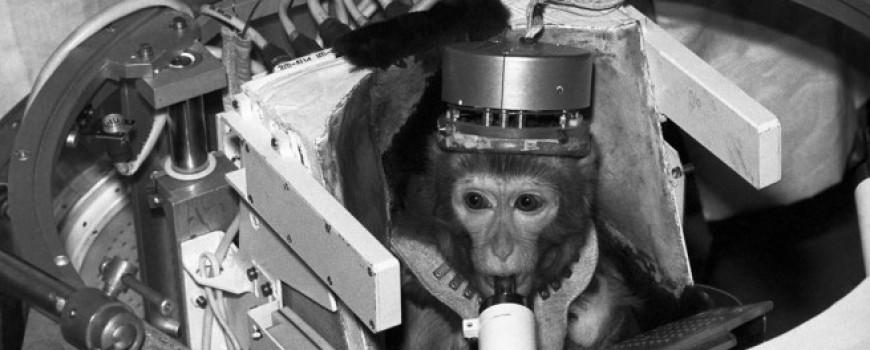 Šta se dogodilo sa životinjama koje su putovale u svemir?