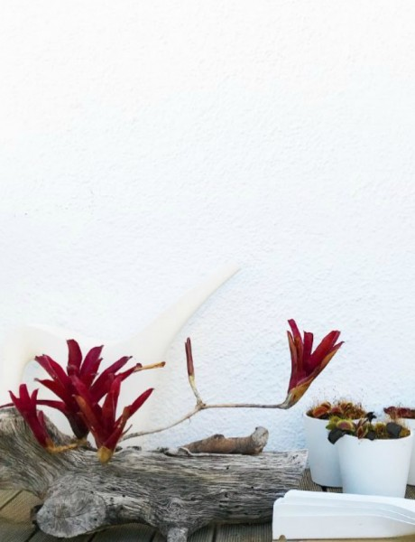 Najsimpatičnije biljke mesožderke