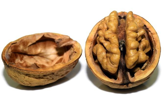 amigdala Tvoj moždani alarm   amigdala