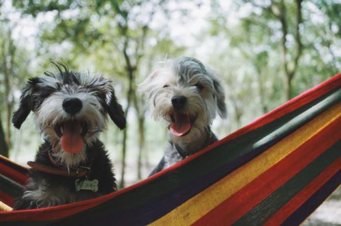 alvan nee 259129 unsplash 1 Ljubitelji pasa, da li ste ovo znali o svojim ljubimcima?