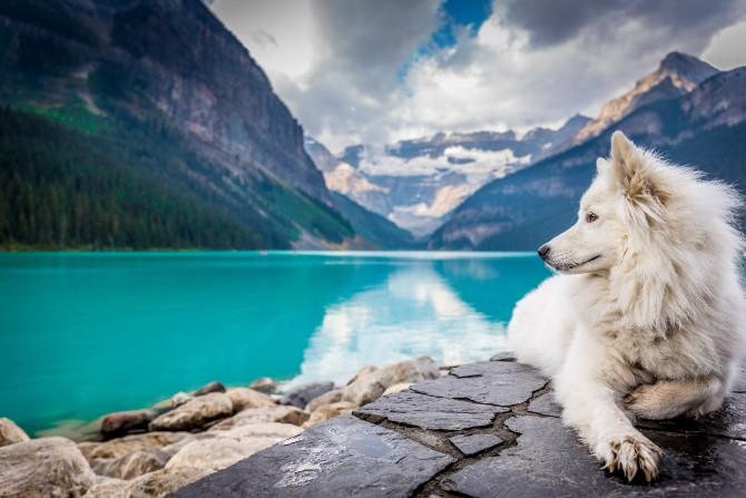 jf brou 358069 unsplash 1 Kako je vuk postao čovekov najbolji prijatelj – pas