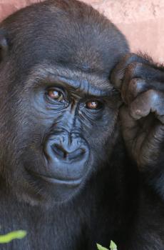 Opšteprihvaćena ubeđenja o životinjama koja uopšte nisu tačna
