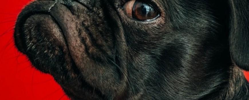 Ljubitelji pasa, da li ste ovo znali o svojim ljubimcima?