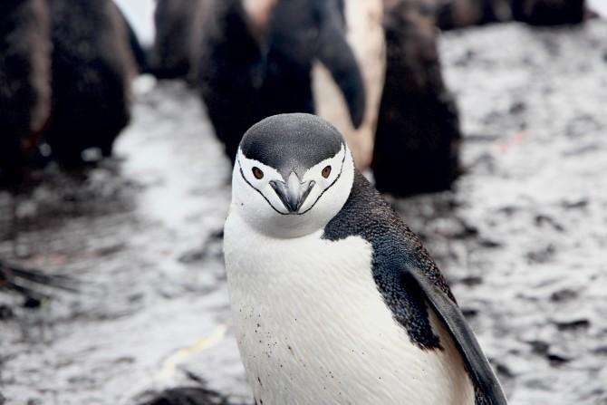 eamonn maguire 212172 unsplash 1 Šta (ne) znaš o pingvinima?
