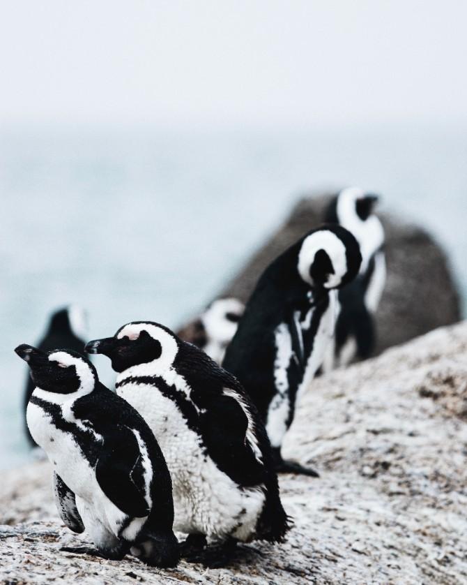 isabella juskova 470919 unsplash 1 Šta (ne) znaš o pingvinima?