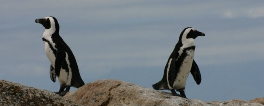 Šta (ne) znaš o pingvinima?