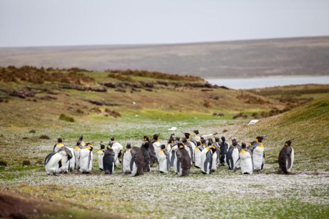 yuriy rzhemovskiy 251115 unsplash 1 Šta (ne) znaš o pingvinima?