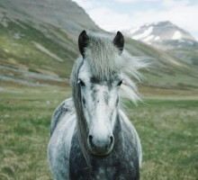 Ta divna stvorenja – konji