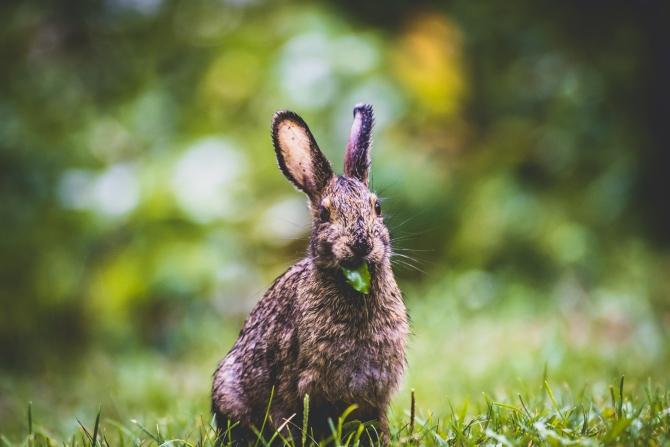 zec Pogrešna ubeđenja o životinjama koja uopšte ne dovodimo u pitanje