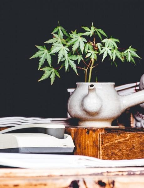 Posao iz snova – diplomirani uzgajivač marihuane (u Kanadi)