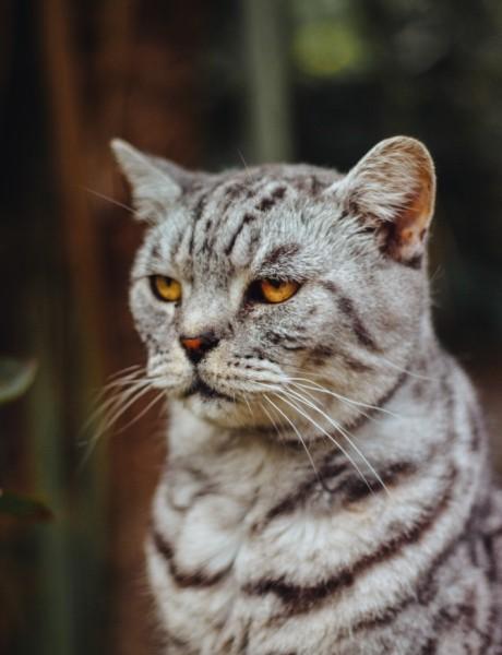 Ti ludi bogataši: Najbogatije životinje na svetu