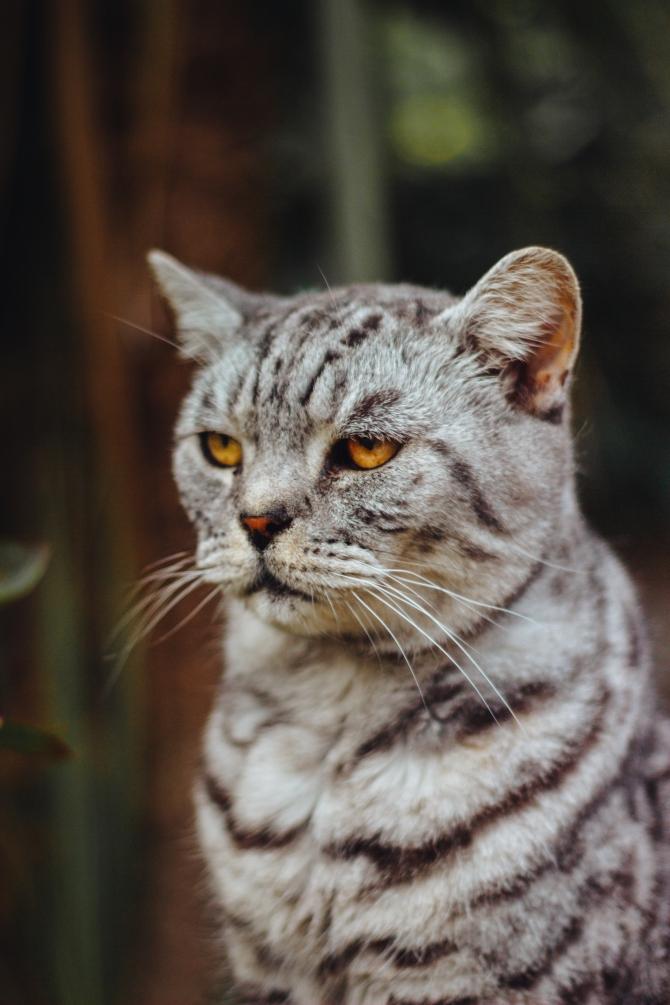 mačke Ti ludi bogataši: Najbogatije životinje na svetu