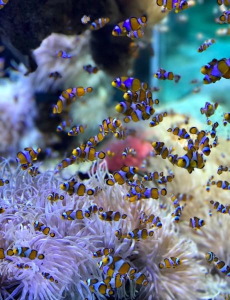 Inspiracija za malo drugačije uređenje enterijera: Šta ti sve treba za dobar akvarijum