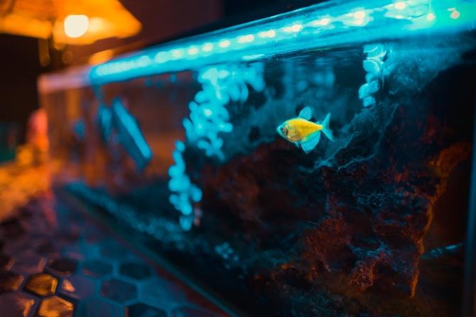 akvarijum 1 1 Inspiracija za malo drugačije uređenje enterijera: Šta ti sve treba za dobar akvarijum
